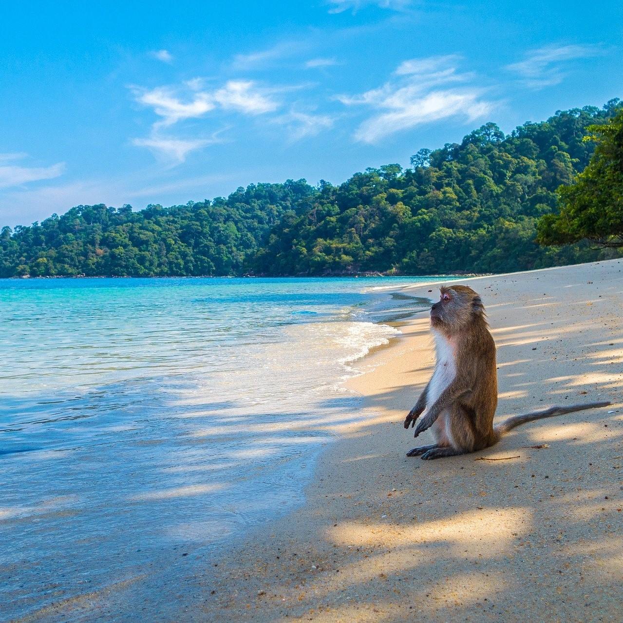 https://www.hladinaalfa.cz/wp-content/uploads/2020/04/thailand-monkey_s.jpg
